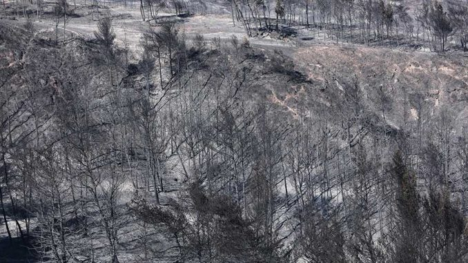 καταστροφή έχει προκαλέσει η φωτιά που ξέσπασε στον Σχίνο Κορινθίας