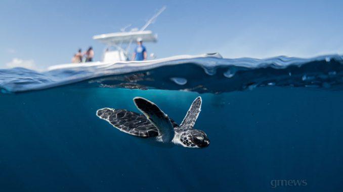 Μεσόγειος είδε μέσα σε 30 χρόνια μια «κατάρρευση» της βιοποικιλότητάς της