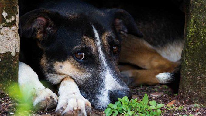 Παγκόσμια Ημέρα Αδέσποτων Ζώων